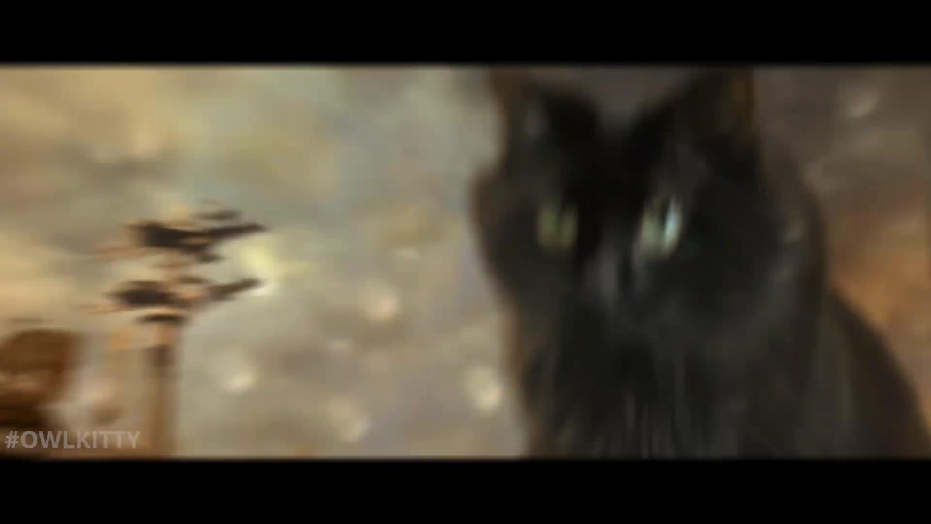 哥斯拉大战金刚视频配音,哥斯拉VS喵星人搞笑配音